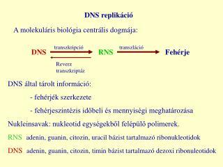DNS replikáció