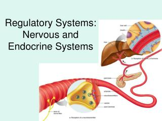 Regulatory Systems:               Nervous and Endocrine Systems