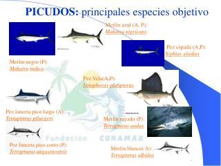 Rp PICUDOS:  principales especies objetivo