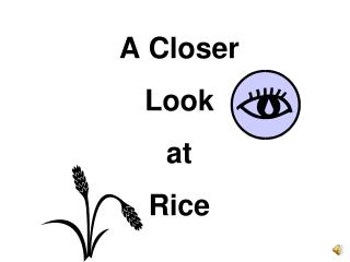 A Closer  Look  at  Rice