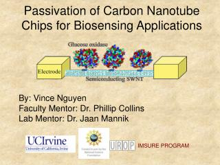 Passivation of Carbon Nanotube Chips for Biosensing Applications