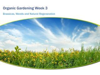 Organic Gardening Week 3