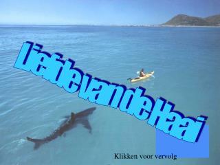 Liefde van de Haai