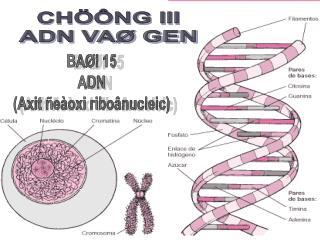 CHÖÔNG III ADN VAØ GEN