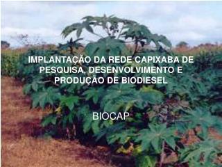 IMPLANTAÇÃO DA REDE CAPIXABA DE PESQUISA, DESENVOLVIMENTO E PRODUÇÃO DE BIODIESEL