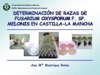 DETERMINACIÓN DE RAZAS DE  FUSARIUM OXYSPORUM  F. SP.  MELONIS  EN CASTILLA-LA MANCHA