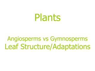 Plants Angiosperms vs Gymnosperms Leaf Structure/Adaptations