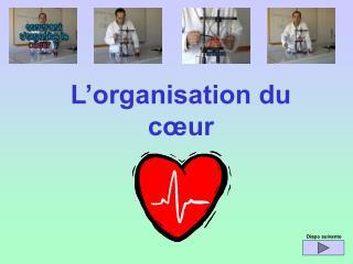 L'organisation du cœur