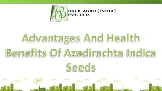 Advantages And Health Benefits Of Azadirachta Indica Seeds
