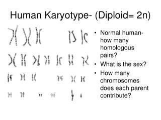 Human Karyotype- (Diploid= 2n)