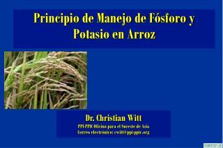 Principio de Manejo de Fósforo y Potasio en Arroz