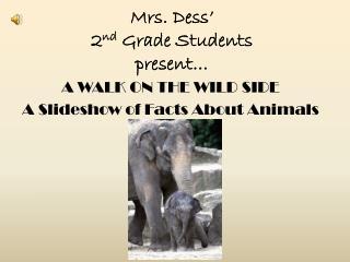Mrs.  Dess � 2 nd  Grade Students  present�