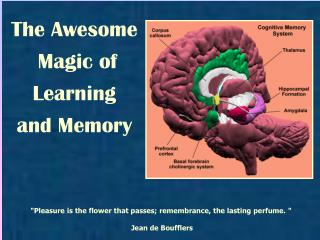 The Awesome  Magic of  Learning  and Memory