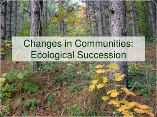 Changes in Communities: Ecological Succession