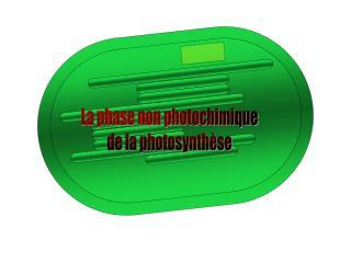 La phase non photochimique de la photosynthèse