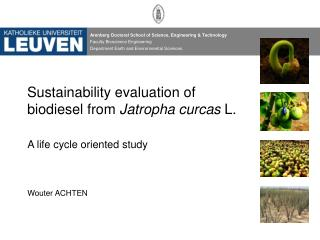 Sustainability evaluation of biodiesel from  Jatropha curcas  L.