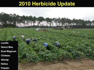 2010 Herbicide Update