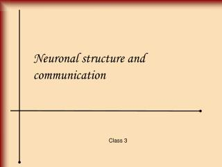 Neuronal structure and communication