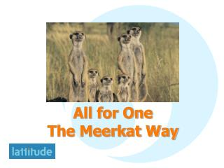 All for One The Meerkat Way