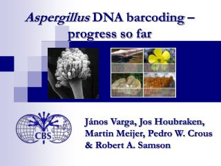 Aspergillus DNA barcoding – progress so far