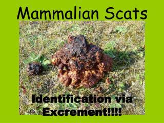 Mammalian Scats