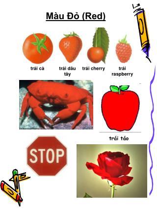 Màu Đỏ (Red)