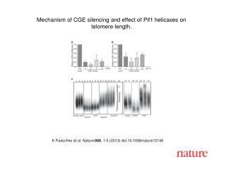 K  Paeschke et al. Nature 000 , 1-5 (2013) doi:10.1038/nature12149
