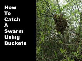 How To Catch A  Swarm Using  Buckets