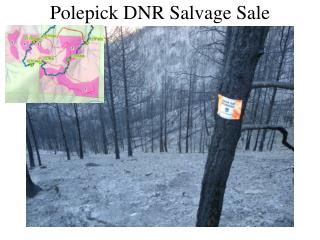 Polepick DNR Salvage Sale