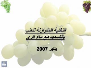 التغذية المتوازنة للعنب بالتسميد مع ماء الرى