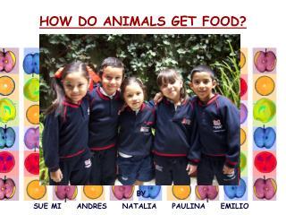 HOW DO ANIMALS GET FOOD?