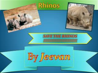 Rhinos