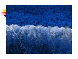 Kvamskogen og verdiskapning for Kvam