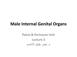 Male Internal Genital Organs