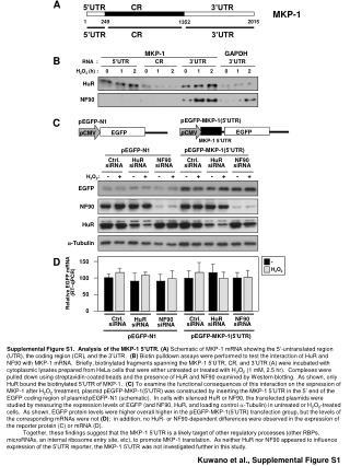 Kuwano et al., Supplemental Figure S1