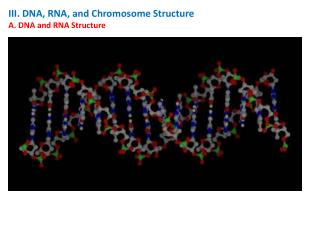 III. DNA, RNA, and Chromosome Structure A. DNA and RNA Structure