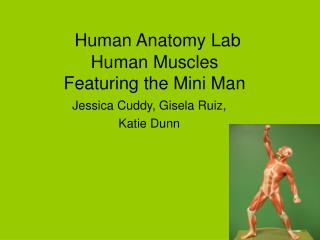 Human Anatomy Lab	 Human Muscles Featuring the Mini Man