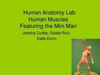 Human Anatomy Lab Human Muscles Featuring the Mini Man