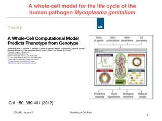 A whole-cell model for the life cycle of the  human pathogen  Mycoplasma genitalium