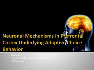 Neuronal Mechanisms in Prefrontal Cortex Underlying Adaptive Choice Behavior