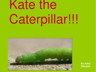 Kate the Caterpillar!!!