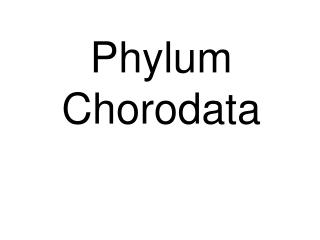 Phylum Chorodata