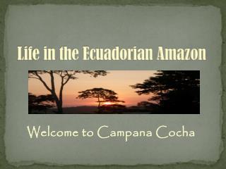 Life in the Ecuadorian Amazon