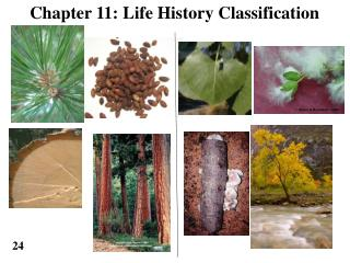 Chapter 11: Life History Classification