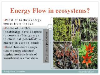 Energy Flow in ecosystems?
