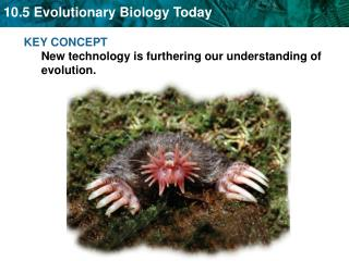 KEY CONCEPT  New technology is furthering our understanding of evolution.