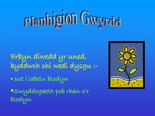 Planhigion Gwyrdd