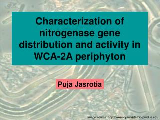 Characterization of nitrogenase gene distribution and activity in WCA-2A periphyton