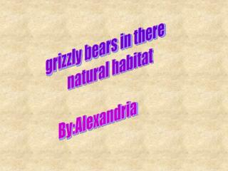 grizzly bears in there          natural habitat    By:Alexandria