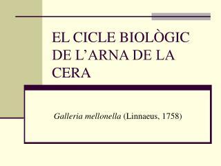 EL CICLE BIOLÒGIC DE L'ARNA DE LA CERA